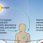 Vitamin D Synthesis in Body